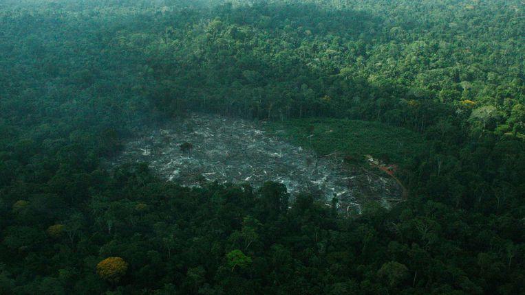 Een open plek in het Amazonewoud als gevolg van houtkap en landbouw. Beeld REUTERS