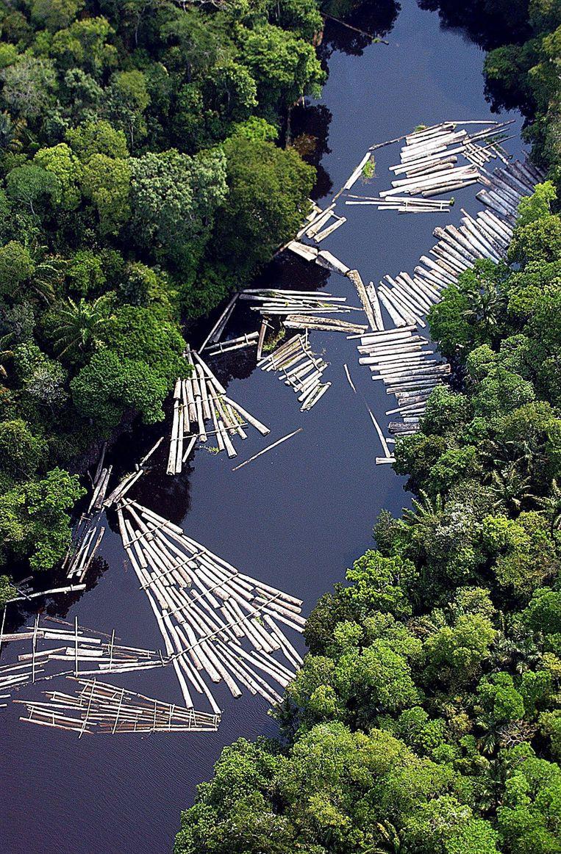 Illegale ontbossing in het Amazonegebied. Beeld EPA