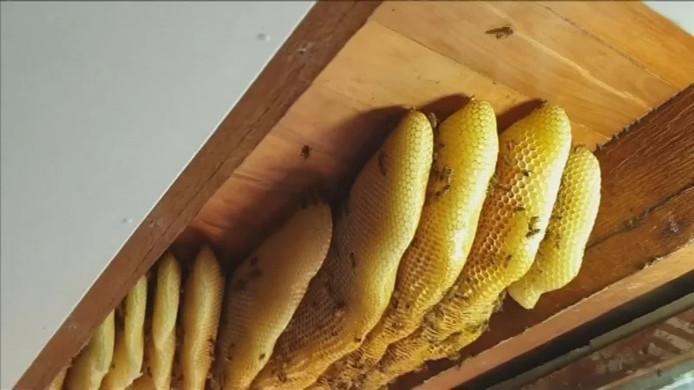 Het uiteinde van het bijennest in het plafond