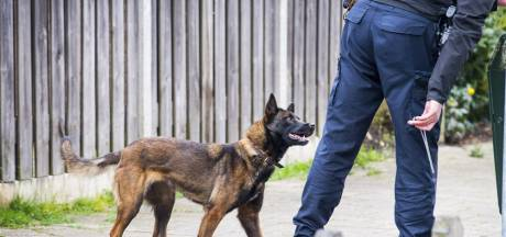 Politiehond spoort inbreker in Lelystad op, tweede verdachte ontsnapt