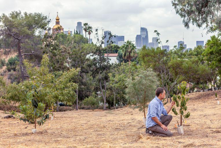 Los Angeles Beeld Trouw