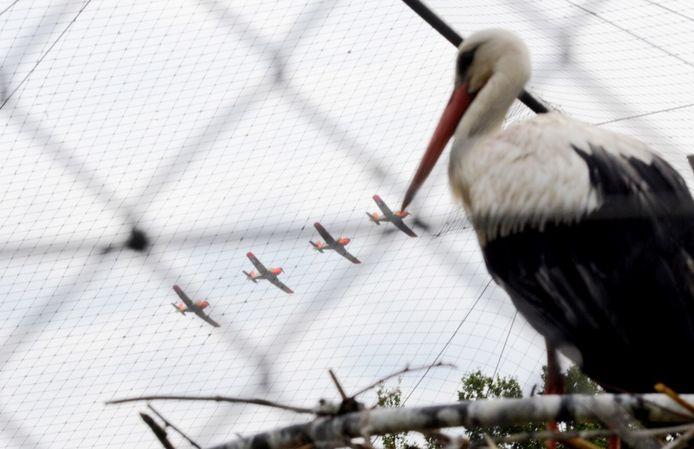 Luchtmachtdagen in Volkel 2019 - Vrijdag. Ook de Ooievaars in het dierentuintje bij de entree hebben mooi uitzicht op de voorbijkomende vliegtuigen.