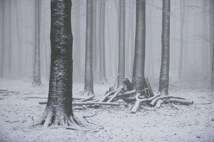 Bomen onder de sneeuw bij Vaals