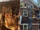 """Imker ontdekt 450.000 (!) bijen in muren van woning: """"De bijen zouden hier al 35 jaar zitten"""""""
