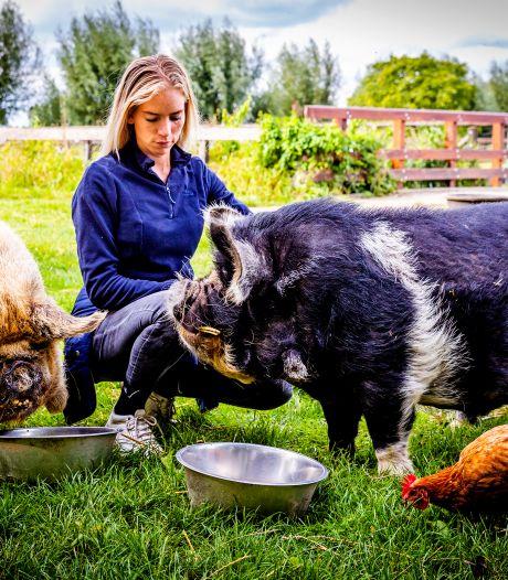 Deze knuffelvarkens schitteren in nieuwe tv-serie: 'Ze houden echt van aandacht'