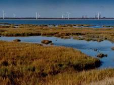 Vogelwerkgroep ageert tegen kitesurfers op Oesterdam