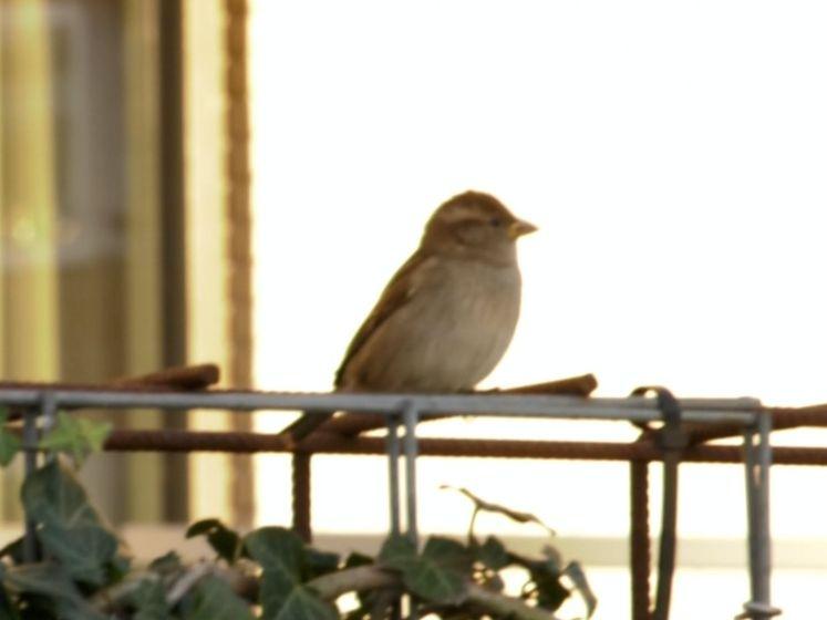 Haagse 'mussenman' geeft vogels een betere leefomgeving