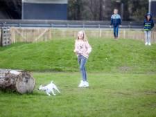 Honden baas in nieuwe weide aan Beisbroekbos