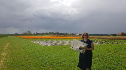 Nieuw project verbindt landbouwers en streekproducenten door innovatieve nicheteelt