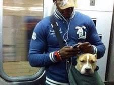 New Yorkse hondenbaas vervoert ook grote viervoeter in tas
