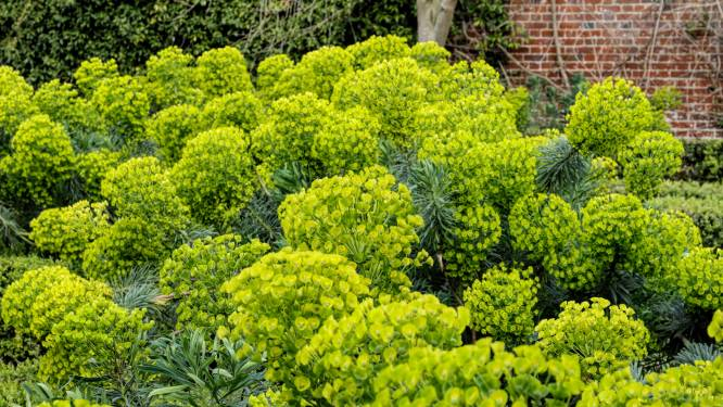 Tien planten waar de slak niets van moet hebben