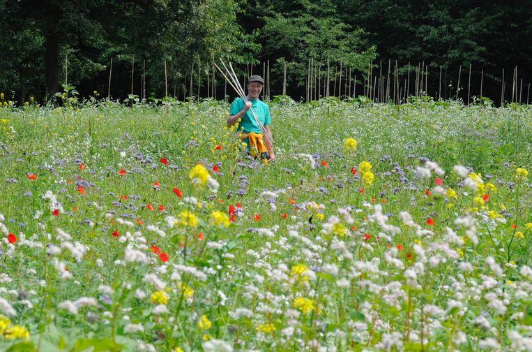 De bloemenweide van kunstenaar Marc Mulders. Beeld Frank van der Linden