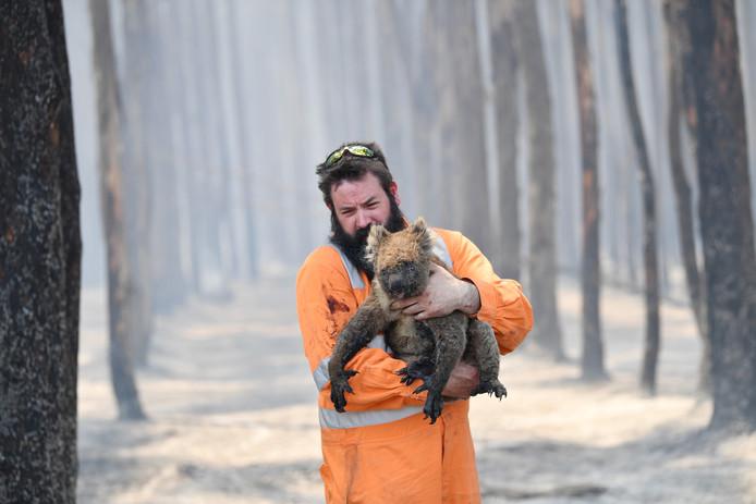 Environ 800 millions d'animaux ont péri rien que dans l'Etat de Nouvelle-Galles du Sud, sur un milliard au total, dans les incendies qui ont ravagé le pays ces derniers mois.