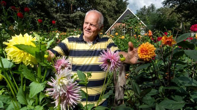 De koster van Ootmarsum geniet weer van zijn Duitse dahliatuin
