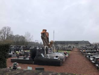 Oude treurwilg op begraafplaats ferm gesnoeid