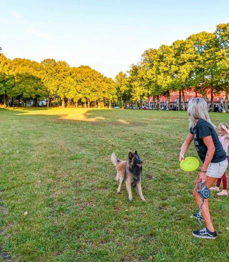 Brand Parkies op Wilhelminaveld staat op losse schroeven: 'Willen geen kippenhok creëren'