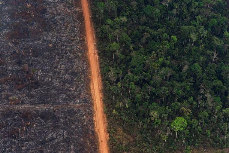 Ontbossing in het Amazonewoud. Beeld AP