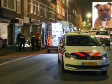 Vrouw zwaargewond na aanval drie agressieve honden: 'Ze zagen geen andere optie dan ze af te maken'