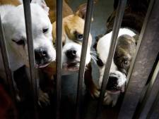 Baasjes verwaarloosde honden voor de rechter: 'Ik dacht dat mijn hond wel zijn behoefte op het balkon kon doen'