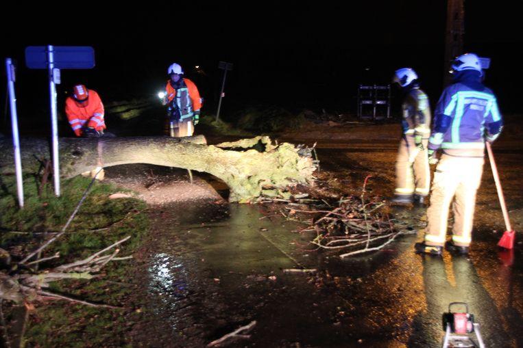 In Gits sneuvelde zondagavond een boom.