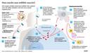Hoe werkt een mRNA-vaccin? Schematische weergave werking vaccins tegen Covid-19 van Pfizer BioNTech en Moderna
