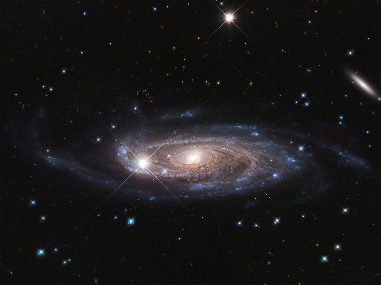 Een van de grootste sterrenstelsels die we kennen, in beeld gebracht door ruimtetelescoop Hubble. Beeld NASA, ESA, and B. Holwerda (Universiteit van Louisville)