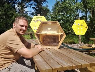 """Alle 15.000 bijen in tentoonstellingskast van De Boerderbij plots gestorven: """"Vermoedelijk zijn ze vergiftigd met een soort pesticide"""""""