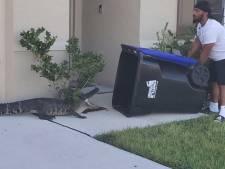 Un homme attrape un alligator avec une poubelle
