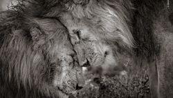 Broederliefde: dit is de mooiste dierenfoto van het jaar
