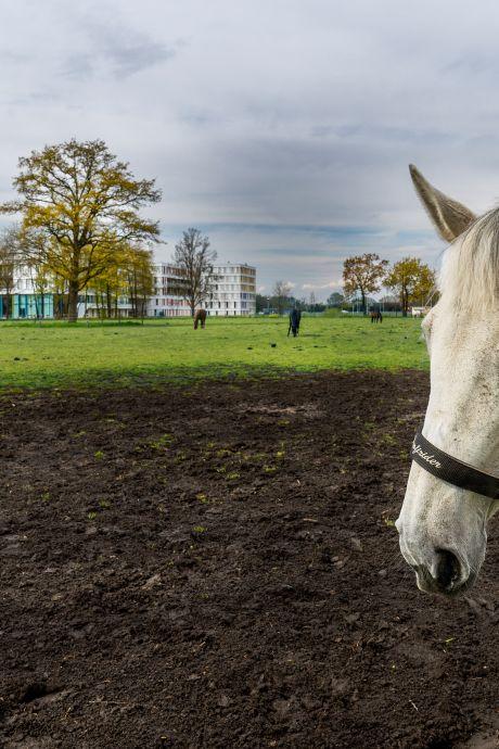 Weekend van de waarheid voor de Hollandse Waterlinie: eindelijk Unesco-werelderfgoed?