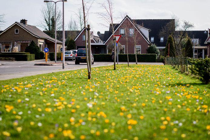 Op verschillende plekken in Haaksbergen is al zichtbaar dat de gemeente binnen de bebouwde kom bloemmengsels inzaait en bloembollen plant.
