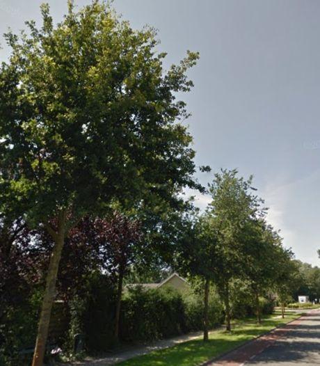 Provincie kapt 10 dode bomen langs N820 in Winterswijk, verkeershinder verwacht