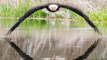 """Imposante foto van zeearend gaat viraal: """"Ik voelde de bries van zijn vleugels"""""""