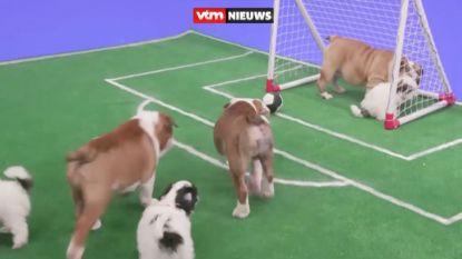 Nog steeds niet bekomen van België-Japan? Relax dan even met... puppyvoetbal