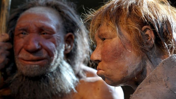 Reconstructies van neanderthalers in het Neanderthal Museum in de Duitse plaats Mettmann.
