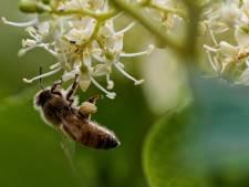 L'Europe veut surveiller les abeilles et pollinisateurs menacés