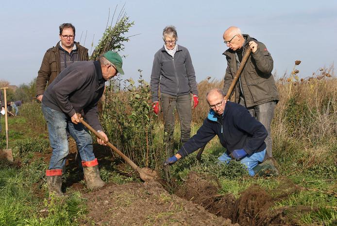 Vrijwilligers planten struiken in het buitengebied, langs de weilanden waar de koeien grazen.