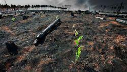 """VN: """"Niveau van ambities tegen klimaatopwarming ligt veel te laag"""""""