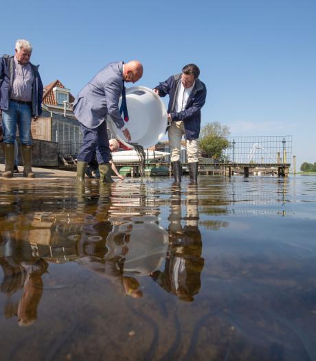 Veertigduizend jonge palingen zwermen uit in viswater rond Kampen