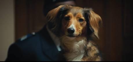"""""""Les innocents"""": campagne choc de la Fondation 30 millions d'amis contre l'abandon des animaux"""