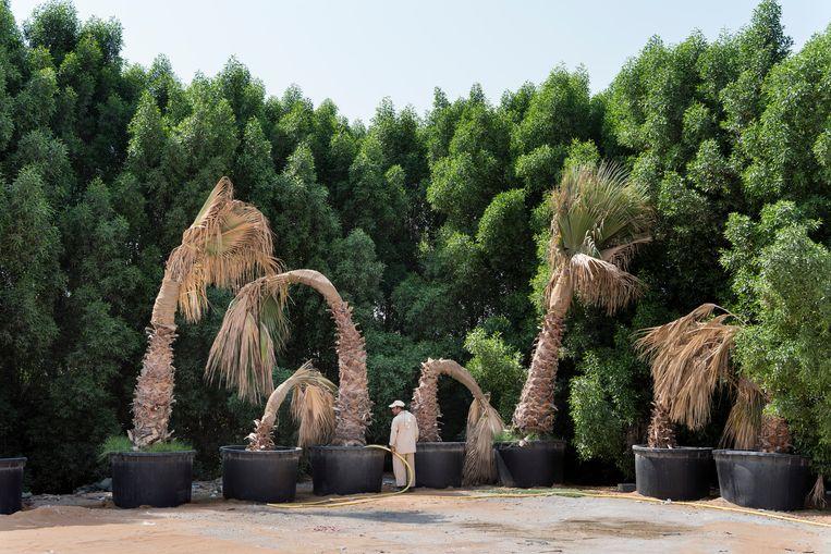 2016. Als zelfs de palmen op het parkeerterrein water nodig hebben.   Beeld NICK HANNES