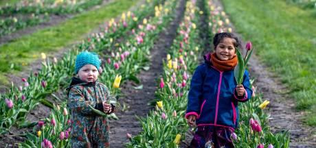 Lente, bloemen en even corona vergeten: pluktuin in Hoogerheide is weer open