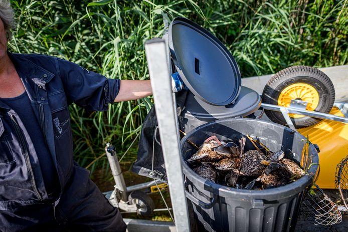 Maandag haalden medewerkers van het waterschap Vechtstromen 160 dode vogels uit het Kristalbad.