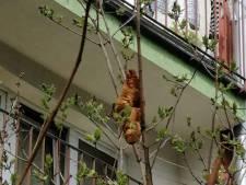 'Gevaarlijk en mysterieus beest' in boom blijkt croissant