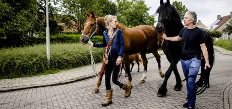Zeeuws hooi voor Limburgse paarden
