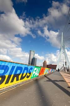 Rotterdam aangekleed voor songfestival: 'Stad laat zien dat er perspectief is'