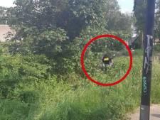 Stuntrit rond Apeldoorn levert drie broers zonder motorrijbewijs bonnenregen op