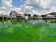 Blauwalg? Het lijkt wel chemisch afval in de Almelose haven, hoe komt dat?
