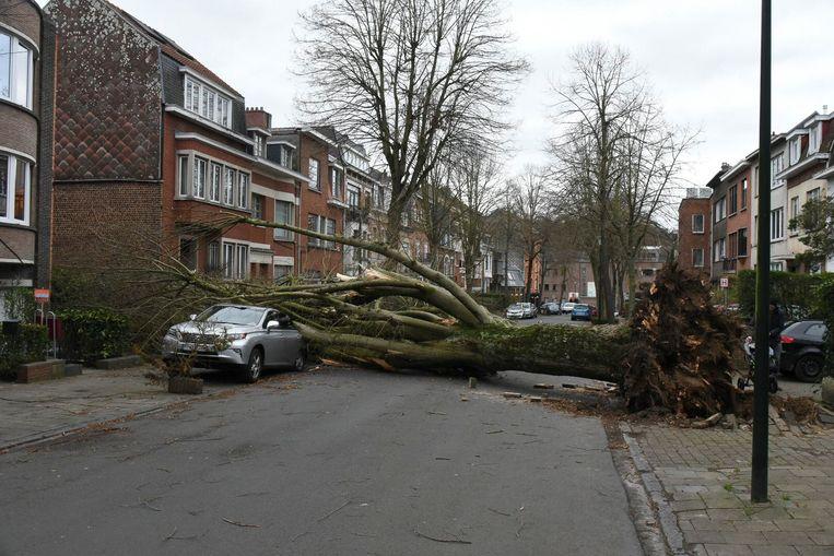 Stormschade in Ukkel. Beeld Baert Marc