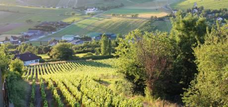 Franse boeren vrezen voor mislukte wijn- en fruitoogst na strenge vorst